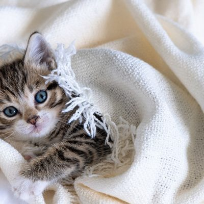 Best Cat Blankets For Your Cat