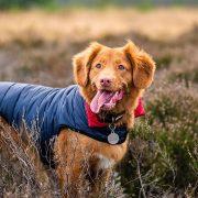 Top 10 Best Dog Coats