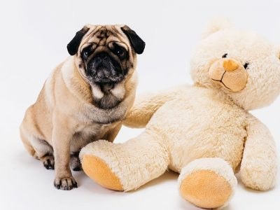 Toys for Puppies