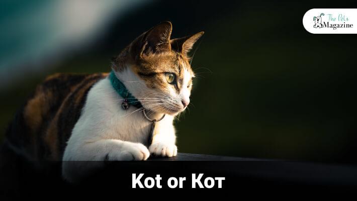 If It's A He-Cat