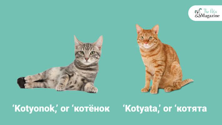 If It's Kitten Or Kittens