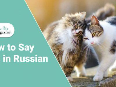 cat in Russian